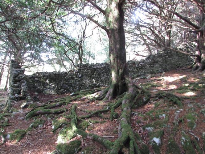 Muckross Woods